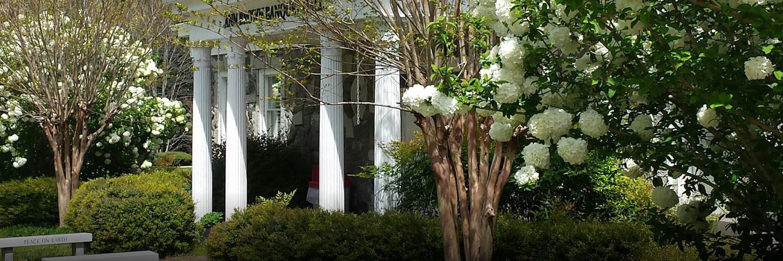 Hydrangeas outside Tamassee building